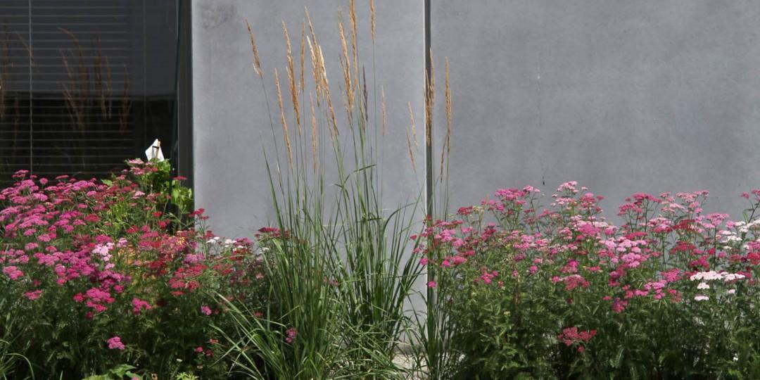 txl-p-1005-pflanzen01